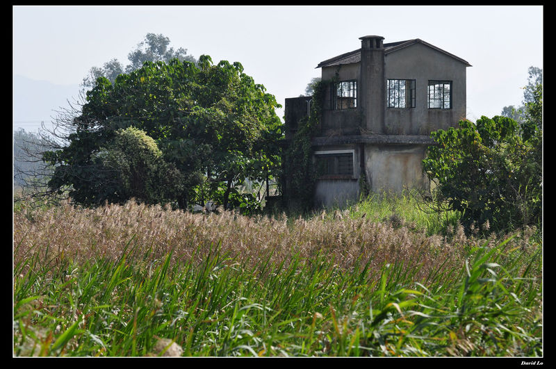 Tree, House, Grass