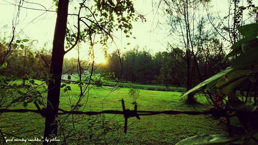 Good Morning Sunshine by P4lsoe