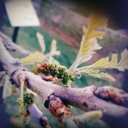 First Eyeem Photo Branches And Leaves Branches Of Trees Checkthisout!