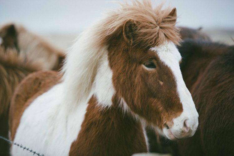 Close-up portrait of horse against sky