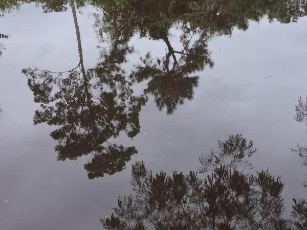 Brasil ♥ Espelho D'agua Peruíbe Reflexo  Reflexo Na Agua Rio Preto Peruíbe