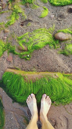 Hanging Out Enjoying Life Green Sand & Sea Sand Feet On The Ground SeeWeed On The Beach Ocean Beach