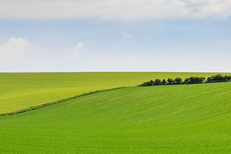 Spring Landscape Agriculture Beauty In Nature Day Field Freshness Grass Green Color Horizon Over Land Landscape Nature No People Outdoors Rural Scene Scenics Seasons Sky Spring Springtime Sussex Tranquil Scene Tranquility
