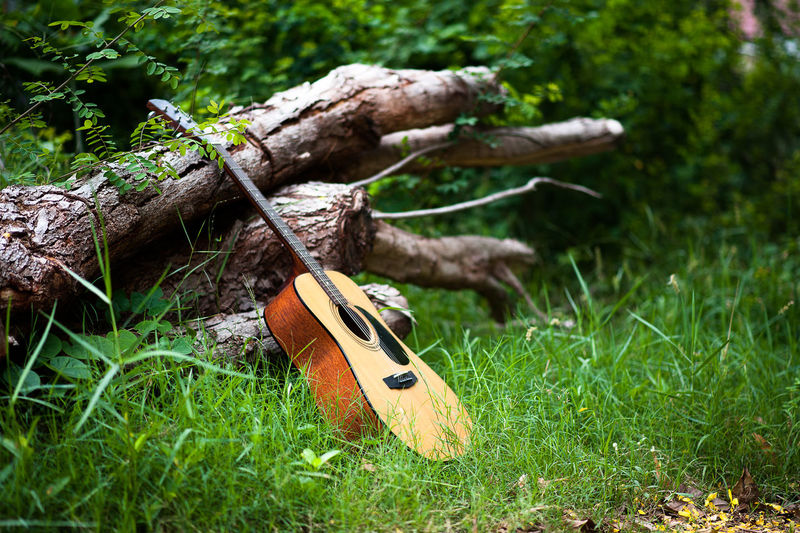 Arts Culture And Entertainment Close-up Day Field Focus On Foreground Grass Green Color Growth Land Music Musical Equipment Musical Instrument Nature No People Outdoors Plant Selective Focus String Instrument Tree Wood - Material