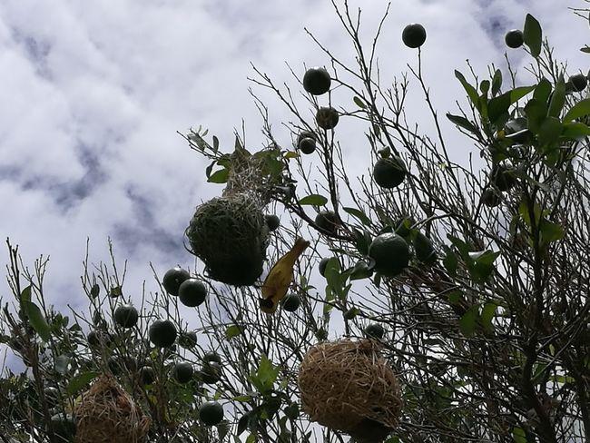 Bird Nests Bird EyeEmNewHere