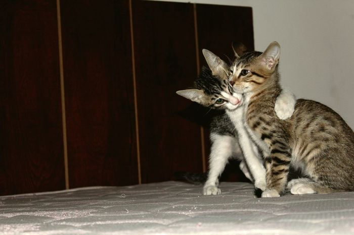 SastaFotu Bharat Cat Cats 🐱 Catlover ♡ in India Animato EyeEmNewHere