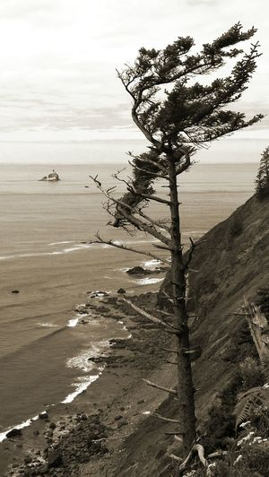 Beaten back by wind, an evergreen tree still reaches for the Tillamook Head Lighthouse. Photo Of The Day Oregon Coast Pacific Ocean Ocean Pacific Northwest  EyeEm Nature Lover Lighthouse Landscapes With WhiteWall