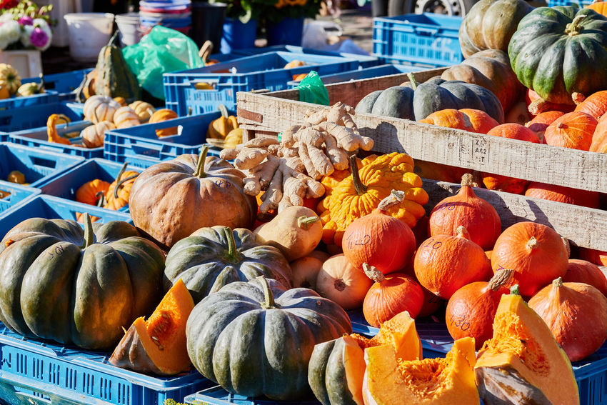 Wooden and plastic crates with green and orange pumkins on a local market offered for sale Colorful Eatng First Eyeem Photo Freshness Green Color Healthy Local Landmark Low Carb Nature Nature_collection Orange Color Pumpkin RGanimals Vegetable