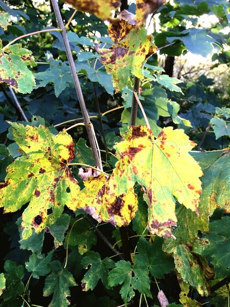Leaf Autumn Leaves Nature Branch Botany