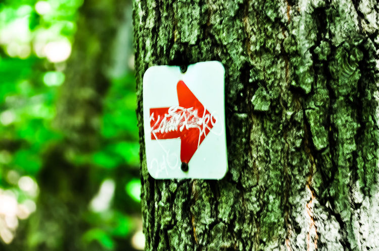Tree Trunk Tree Day Red Road Sign Nature Close-up Symbol