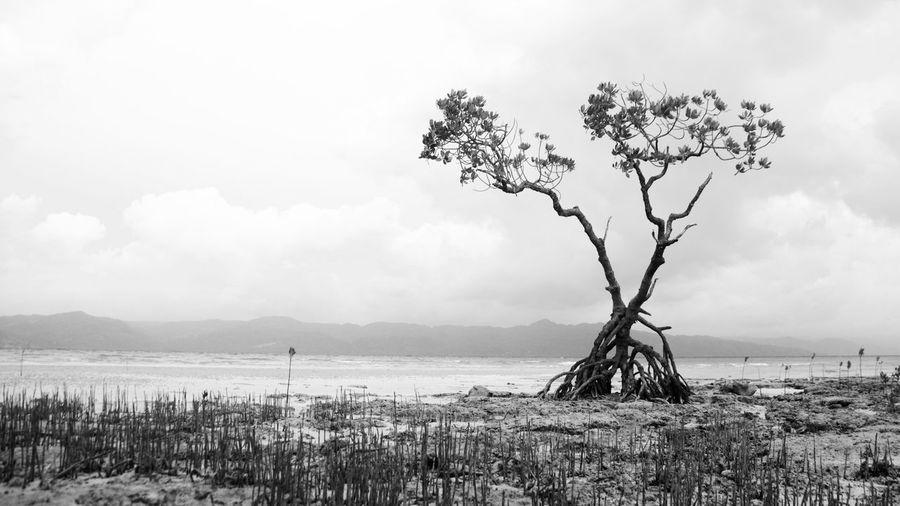 Blackandwhite Eyeem Philippines Grey Mangrove Monochrome Tree Black And White Friday