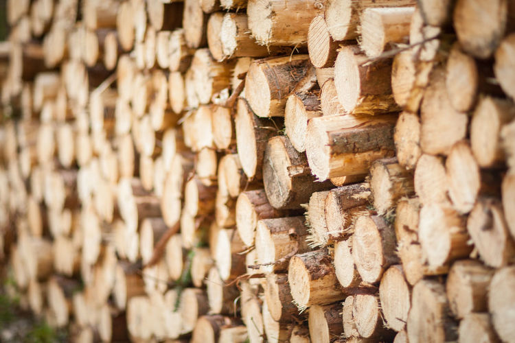Pile Of Wood Wood Abundance Backgrounds Cut Down Cut Down Trees Cutdowntree Cutdowntrees Firewood Forest Large Group Of Objects Log Logs Logs Pile Lumber Lumber Industry No People Pattern Selective Focus Stack Timber Timber Industry Tree Wood Wood - Material