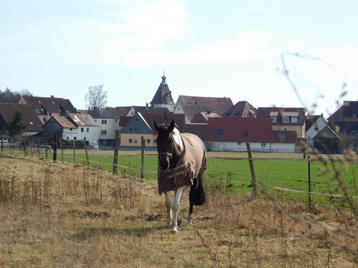 horseee Rural Scene Agriculture Sky Ranch Horse Fence Horseback Riding