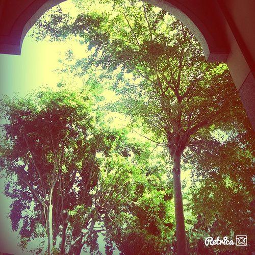 叫我文青。? 文青 Tree