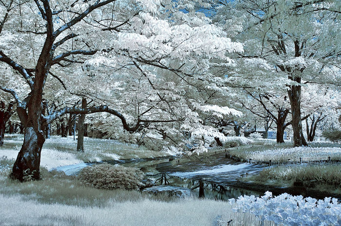 IR_Garden Infrared Infrared Color Infrared Photo Infrared Photography Ir Photography Landscape Outdoors Tree