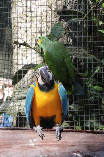 Close-up of a bird perching in cage