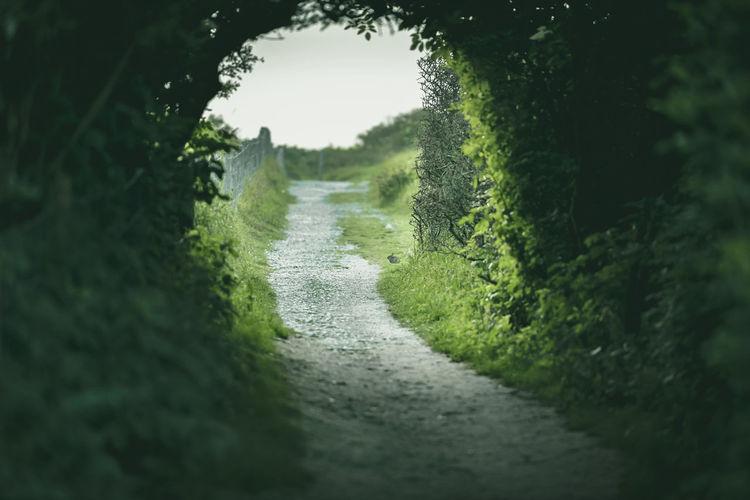 Rabbit portal