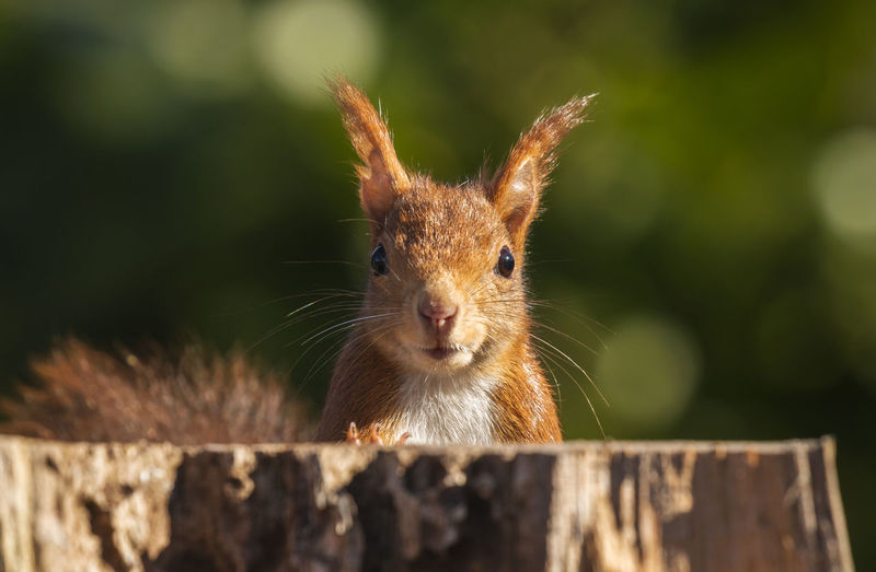 Squirrel Squirrel Squirrel Closeup Squirrels Animal Animals In The Wild Wildlife Wildlife Photography Animallovers Cute Awesome Animal Themes Animal Wildlife Close-up One Animal Selective Focus Outdoors Animal Head  Nature Portrait
