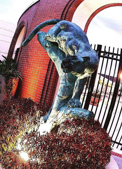 Go Panthers! Panther pride. EyeEm Animal Lover Statue Night Photography