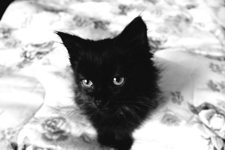 Gatto Cats Cat♡