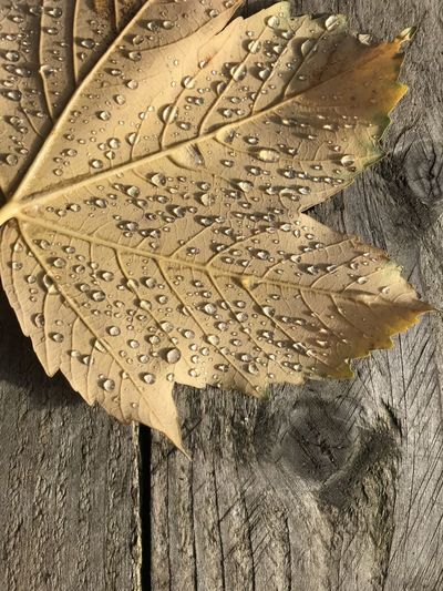 High angle view of leaf on wood