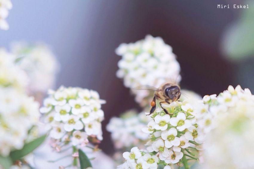 Beeandflower Mylovelygarden 🌿 Bugs Flower Collection Animal Themes Macro Photography
