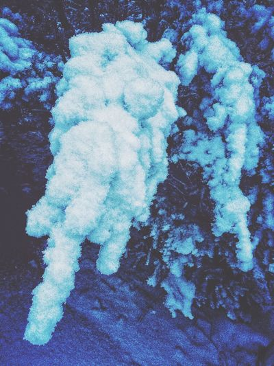 Dusk has fallen..... Dusk At Dusk Night Nightphotography Night Photography Snowy Tree Snowy Trees USA IPhoneography Iphonephotography Snowing ❄ Snow Storm Stratford Stratfordct Stratford CT Connecticut (null) New England  Snow ❄ Snow Winter Wonderland Showcase: February