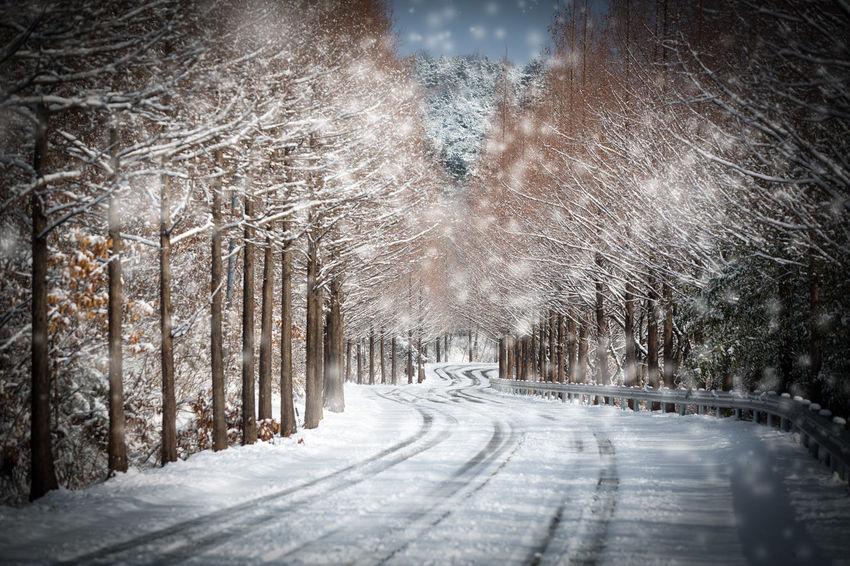 메타쉐콰이어길 Korea EyeEmNewHere Youngkwang Snow Winter Cold Temperature The Way Forward Road Transportation Weather Tree No People Outdoors Landscape Beauty In Nature Snowing Nature