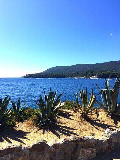 Nature Blue Beauty In Nature Tranquil Scene Clear Sky Sunlight Tranquility Sea Copy Space Scenics Growth Cactus Plant Outdoors No People Day Mountain Water Sky Porto Azzurro Isola D'Elba  Nature