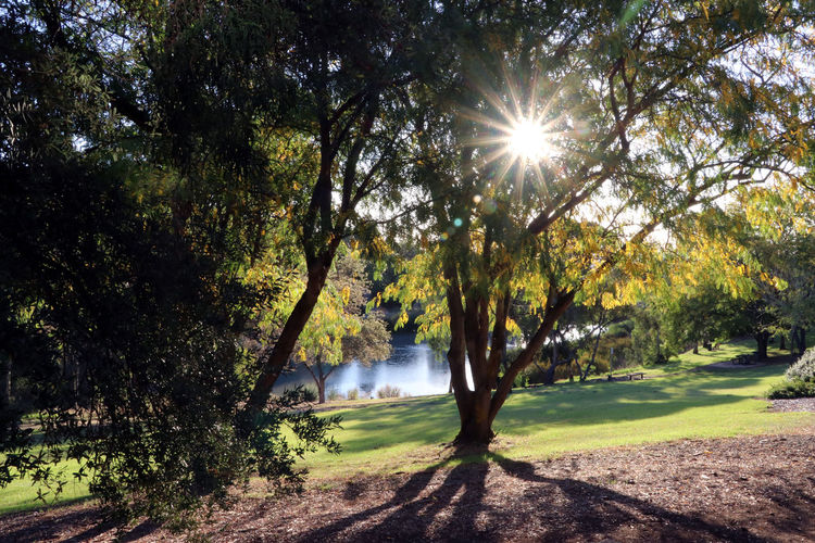 Australian campus Australia Beauty In Nature Campus Campus Grounds Day Flinders University Landscape Lens Flare Nature No People Outdoors Scenics Shadow Sky Sun Sunbeam Sunlight Tranquil Scene Tranquility Tree University Water