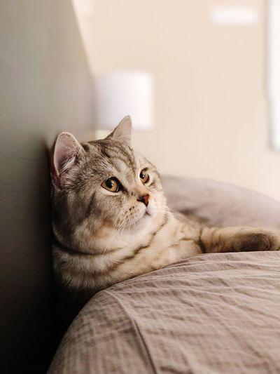 Day Dreaming EyeEm Selects Pets One Animal Mammal Feline Animal Domestic Cat Domestic Cat