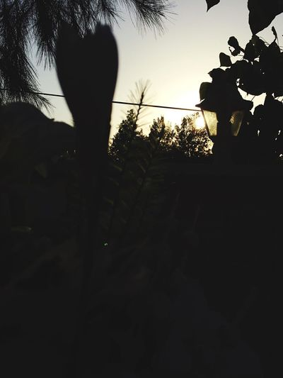 Tree Silhouette Sunset Nature Sky Palm Tree Growth Low Angle View No People Scenics Leaf Outdoors Beauty In Nature Clear Sky Day Close-up