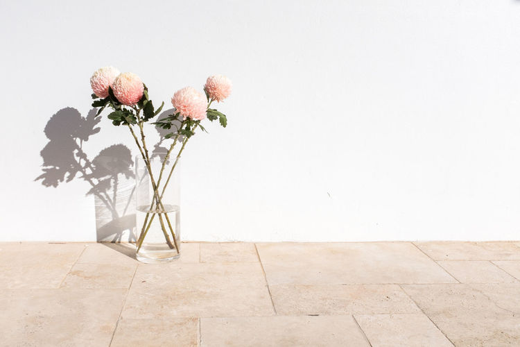 Rose plant in vase against wall