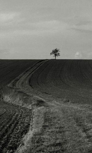 """Autumn Landscape Blackandwhite Tree""""Die Blätter fallen, fallen wie von weit, als welkten in den Himmeln ferne Gärten; sie fallen mit verneinender Gebärde. / Und in den Nächten fällt die schwere Erde aus allen Sternen in die Einsamkeit. / Und wir alle fallen. Diese Hand da fällt. Und sieh dir andre an: es ist in allen. / Und doch ist Einer, welcher dieses Fallen unendlich sanft in seinen Händen hält."""" Rainer Maria Rilke"""