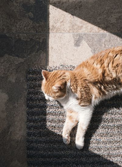 High angle view of cat looking at shadow on city street