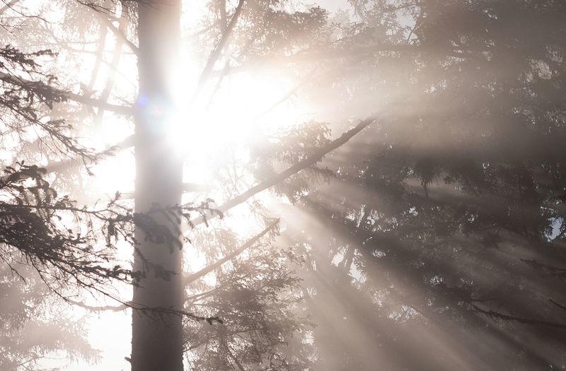 Sunrise Sunbeam