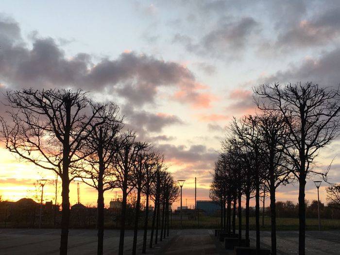 Hull City Of Culture 2017 Tree Bare Tree Sunset Cloud - Sky Outdoors Dramatic Sky No People Winter Tree Port Of Hull Hull 2017 City Of Culture 2017
