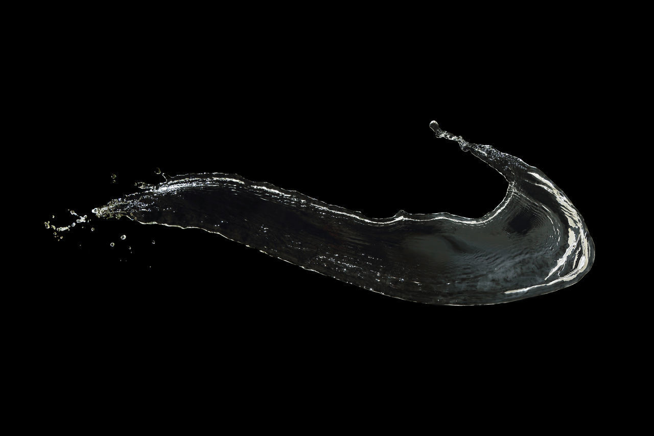 studio shot, black background, copy space, one animal, indoors, no people, close-up, animal themes, animal, animal wildlife, animals in the wild, water, cut out, swimming, invertebrate, nature, vertebrate, single object, side view, marine
