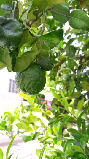 Branch Close-up Day Food Food And Drink Freshness Fruit Green Color Growth Healthy Eating Leaf Nature No People Outdoors Plant Tree