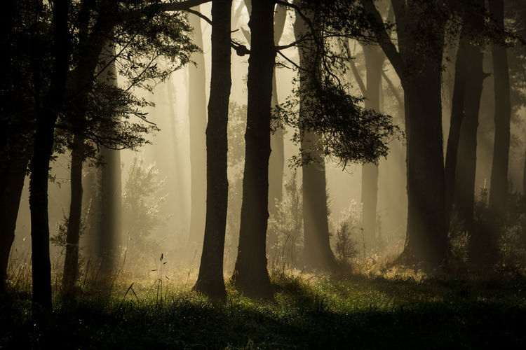 Magic Beauty In Nature Branch Bright Day Field Fog Fog Machine Fog_collection Foggy Morning Forest Growth Lush Foliage No People Outdoors Pace Remote Scenics Sunbeam Tranquil Scene Tranquility Tree Tree Trunk Trees WoodLand Woods