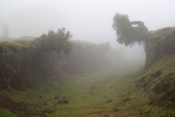 Beauty In Nature Fog Green Landscape Lonely Magic Places Mist Mystic Nature No People Outdoors Tree Road To Nowhere Spooky Spooky Atmosphere Destination Unknown IntoTheUnknown........ Path To Nowhere Path Creepy Hikingadventures Hiking