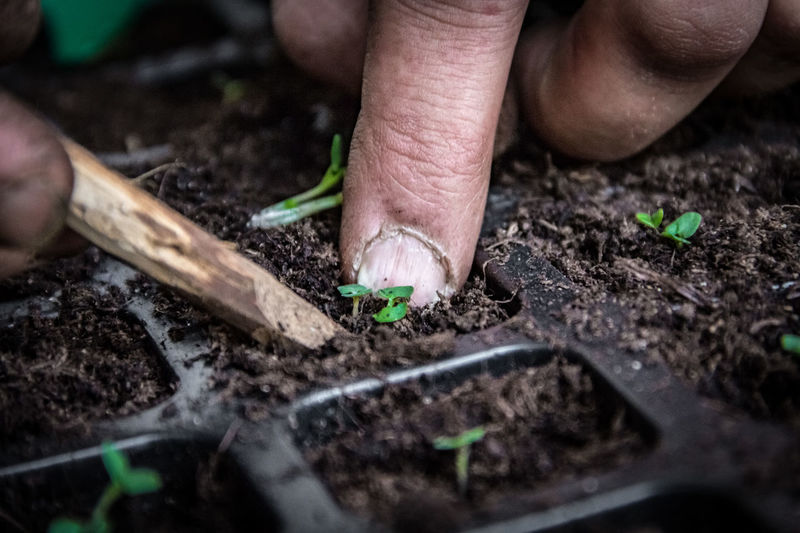 Cropped Image Of Hand Planting Seedling In Container