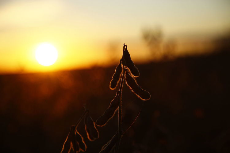 Atardecer Campo Cultivo EyeEm EyeEm Best Shots EyeEm Nature Lover EyeEm Selects EyeEm Gallery EyeEmBestPics EyeEmNewHere Farm Farm Life Farmland Eye4photography  Land Nature Planta Plantation Sky Soja Sol Soy Sun Sunrise Sunset