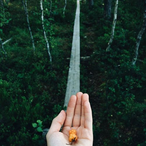 Cropped Image Of Hand Holding Berries In Forest
