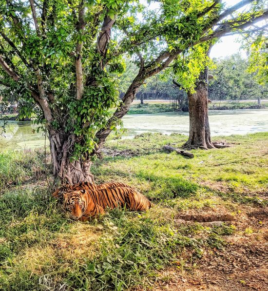 Tree Nature Growth Outdoors Day Beauty In Nature No People Field