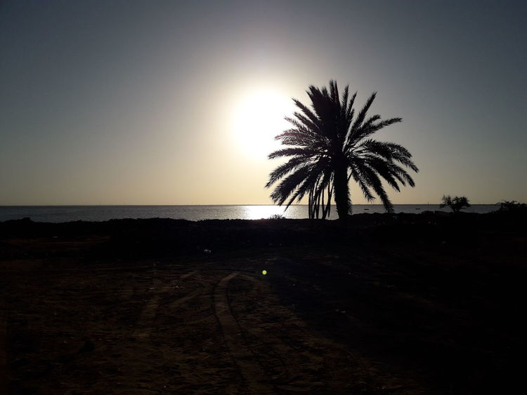 The Week On EyeEm Palm Tree Sunset Beach Sea Tree Nature No People Beauty In Nature Outdoors Horizon Over Water Day Water Sun راحة سكينة هدوء ڨلالة جربة  تونس Nature Tree Vacations Travel Tourism Perspectives On Nature Black And White Friday
