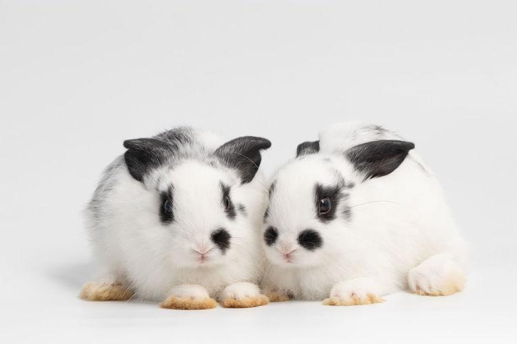 Rabbit at the