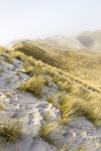 Sand dunes along the beach in Netherlands Beach Beauty In Nature Fog Grass Green Color Growth Idyllic Landscape Nature Netherlands Non-urban Scene Plant Sand Sand Dune Scenics Sea Sky Stream Tranquil Scene Tranquility Water The KIOMI Collection