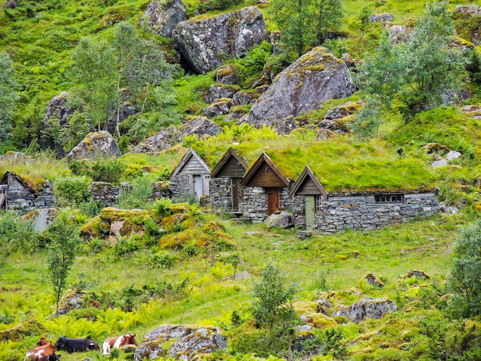 House and trees by rocks
