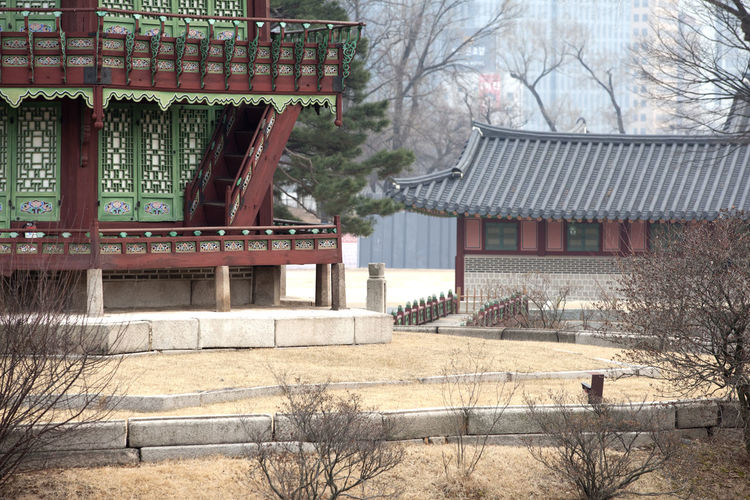 Architecture Bare Tree Branch Building Building Exterior Built Structure City Day Exterior Gyungbok Palace Historic Place House Korean Traditional Architecture Nature No People Outdoors Palace Residential Building Residential Structure Roof Sky Travel Destinations Tree Tree Trunk